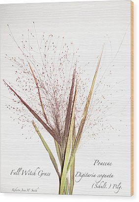 Fall Witch Grass Wood Print