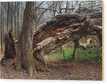 Fallen 1 Wood Print by Jim Vance