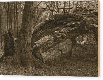 Fallen 2 Wood Print by Jim Vance