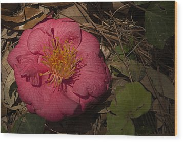 Fallen Beauty Wood Print by Frank Feliciano