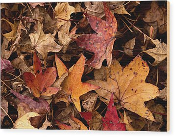 Fallen Leaves Wood Print by Rebecca Davis