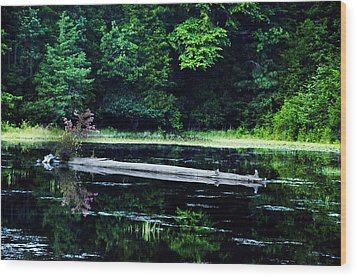 Fallen Log In A Lake Wood Print by Bill Cannon