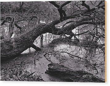 Fallen Tree Wood Print by Dariusz Gudowicz