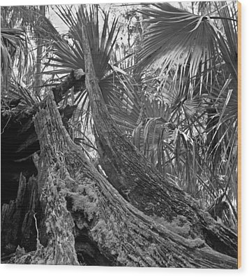 Fallen Tree. Highlands Hammock S.p. Wood Print