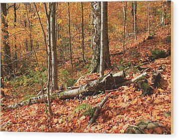 Wood Print featuring the photograph Fallen Trees by Alicia Knust