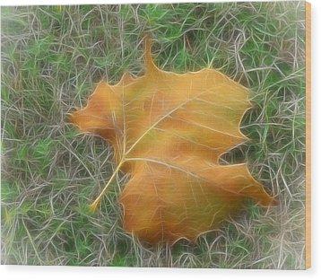 Fallen Wood Print by Wendy J St Christopher