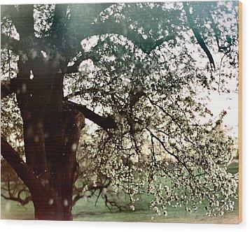 Falling Blossoms Wood Print