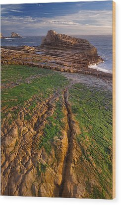 Wood Print featuring the photograph Panther Beach - Falling  by Francesco Emanuele Carucci
