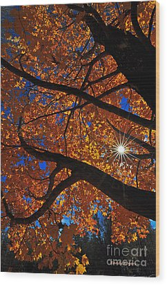 Falling Star Wood Print