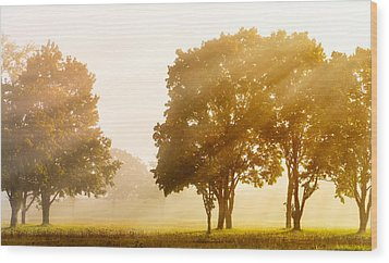Falls Delight Wood Print by James Heckt