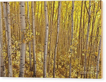 Fall's Golden Light Wood Print by Steven Reed