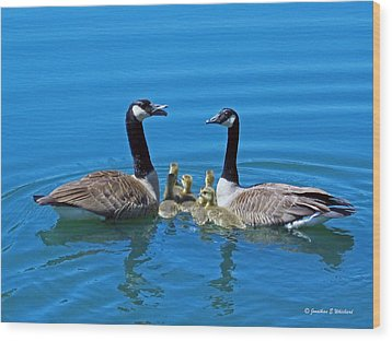 Family Canada Geese Wood Print by Jonathan Whichard
