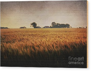 Family Farm Wood Print by Lisa Holmgreen
