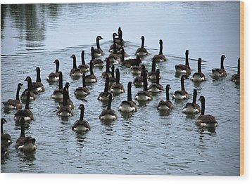 Family Of Geese Wood Print by Linda Segerson