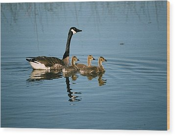 Family Outing Wood Print by David Porteus
