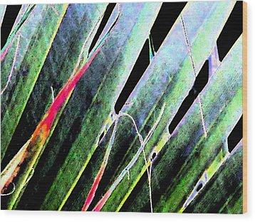 Fan Palm On Wet Day Wood Print