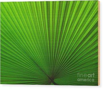 Fan Palm Wood Print by Ranjini Kandasamy