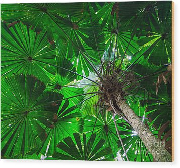 Fan Palm Tree Of The Rainforest Wood Print by Peta Thames