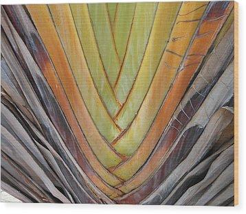 Fan Palm Trunk Wood Print