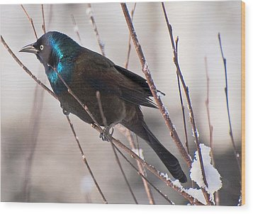 Wood Print featuring the photograph Fancy Aggressor by John Harding