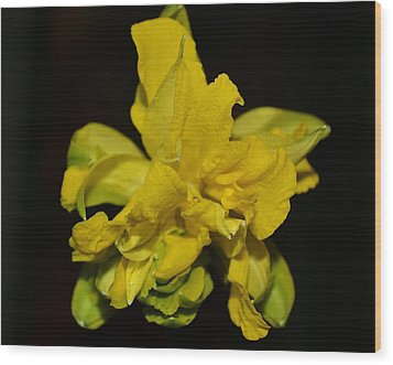 Wood Print featuring the photograph Fancy Daffodil by Mary Zeman
