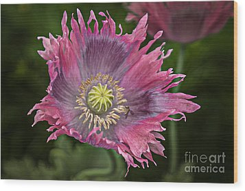 Wood Print featuring the photograph Fancy Poppy by Vicki DeVico