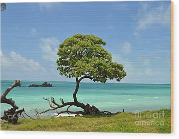 Fanning Tree On Beach Wood Print