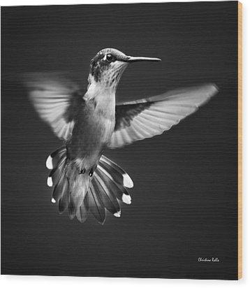 Fantail Hummingbird Wood Print