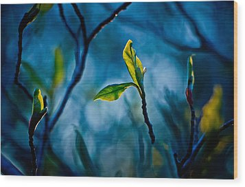 Fantasy In Blue Wood Print by Linda Unger