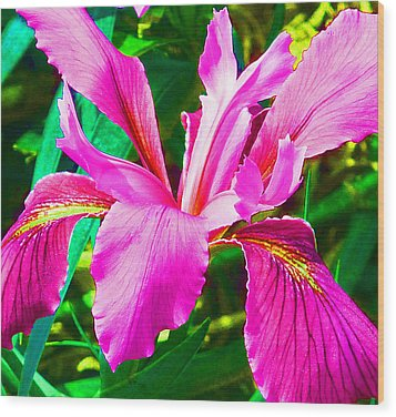 Fantasy Iris Wood Print by Margaret Saheed