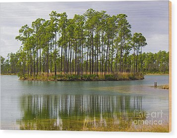 Fantasy Island In The Florida Everglades Wood Print