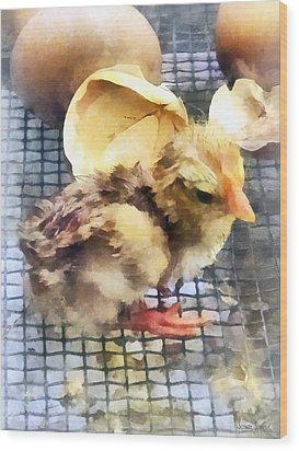 Farm Animals - Just Hatched Wood Print by Susan Savad