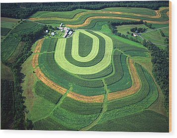 Farm Greens And Hillside Contour Plowing Wood Print by Blair Seitz