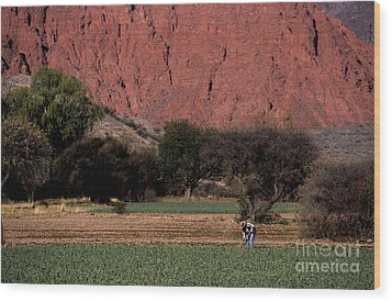 Farmer In Field In Northern Argentina Wood Print by James Brunker