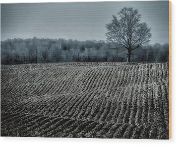 Farmfield Furrows Wood Print by Henry Kowalski