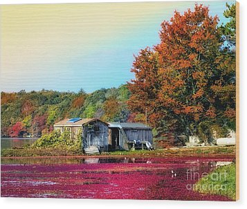 Wood Print featuring the photograph Farming Cranberries by Gina Cormier