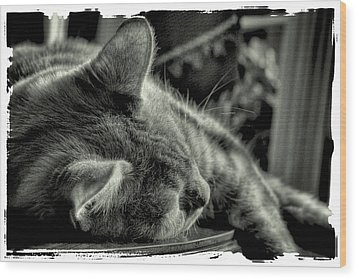 Fatigued Feline Wood Print by David Patterson