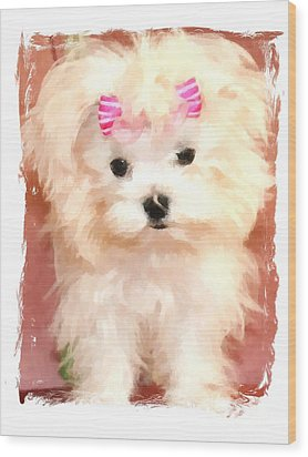 Faux Maltese Bella Wood Print by Margaret Newcomb