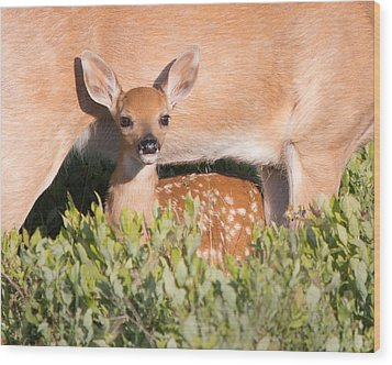 Fawn And Mom Wood Print