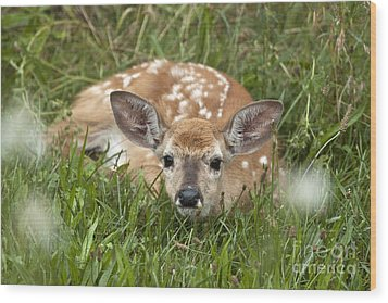 Fawn Wood Print by Jeannette Hunt