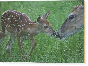 Fawn Kiss Wood Print