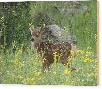 Fawn In Evergreen Colorado Wood Print