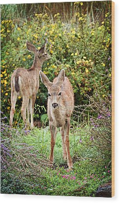 Wood Print featuring the photograph Fawns Eating Flowers by Peggy Collins