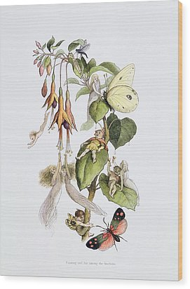 Feasting And Fun Among The Fuschias Wood Print by Richard Doyle