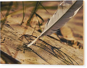 Feather And Sand Wood Print by Raimond Klavins