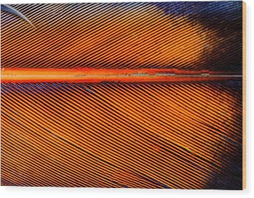 Feather Of A Flicker Wood Print