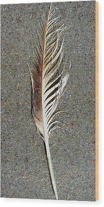 Feather On The Beach Wood Print by Patricia Januszkiewicz