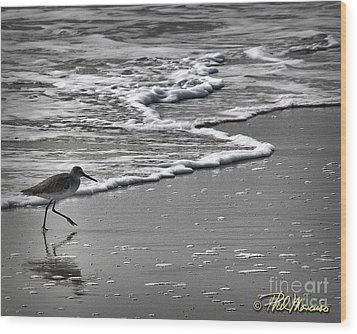 Feathered Friend At The Beach Wood Print by Phil Mancuso