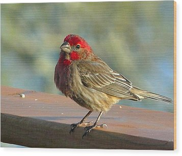 Feathered Friend Wood Print by Cindy Croal