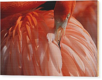 Wood Print featuring the photograph Feathered by Lorenzo Cassina